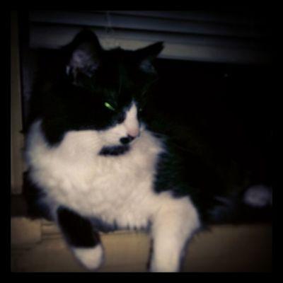 Mr. P. J. Johnson ??? Cats Catsofinstagram Felinefamily Fiercefelines