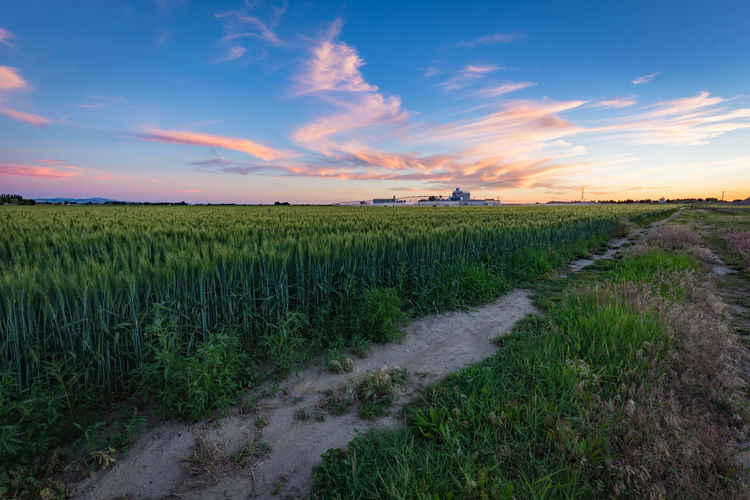 Scenic view of agriculture field against sky during sunset
