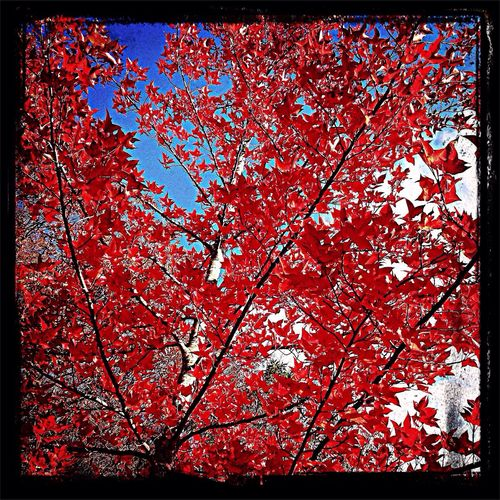 Trees Nature Red