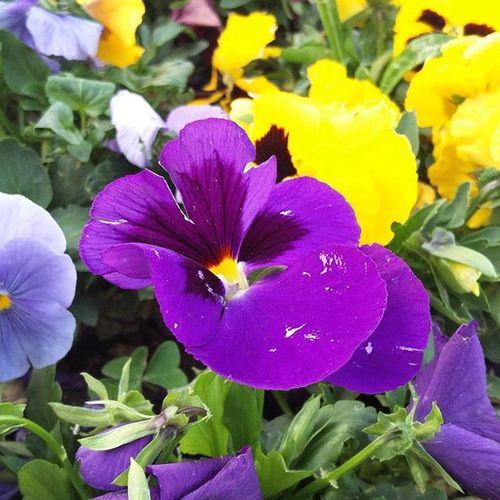 Sangam2016 Lbsnaa Flower Purple Macro Oneplus2 Nofilter