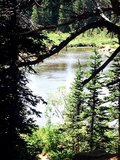 Tree Nature Water Forest Beauty In Nature Day No People Tranquility Sunlight Outdoors Tranquil Scene Scenics Branch Growth Lake Freshness Rosevelt National Forest Colorado