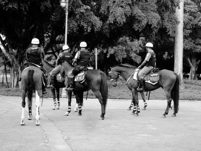 Cavalaria Policia Militar Cloud And Sky Natural Horses Black And White Friday Mobility In Mega Cities