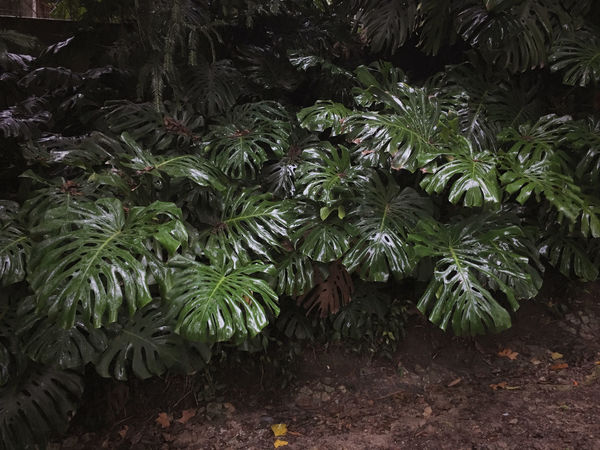 Dark, Day Foliage Garden Green Color Growth Lisbon Mistery Nature No People Outdoors Park, Plant