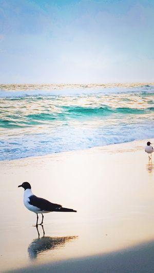 2dudes Bird Water Sea Beach Astrology Sign Full Length Silhouette Sky Horizon Over Water Landscape