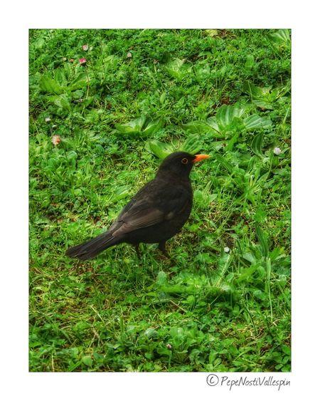 Bird One Animal Nature Pola De Siero Asturias , Spain Outdoor Photography