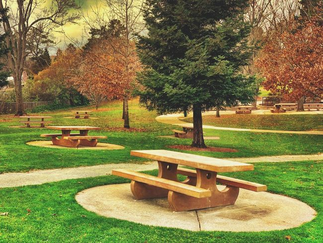 """""""Picnic In The Park"""" An ample amount of picnic tables are available in a local suburban park in Northern California. Autumn Collection Autumn Fall Colors Fall Beauty City Parks City Park Picnic Tables Picnic Table Tree Park Grass Park - Man Made Space Sunlight Nature Green Color Seat No People Lawn Tranquility Empty"""