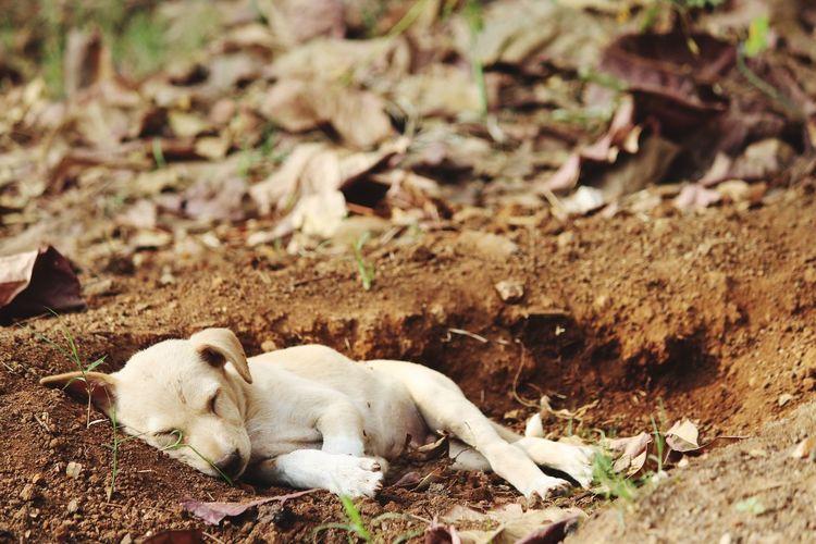Dog lying on ground