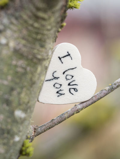 Beauty In Nature Close-up Communication Day Focus On Foreground Heart Shape Nature No People Outdoors Text Tree Tree Trunk