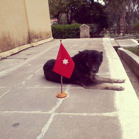 Redflag Dog