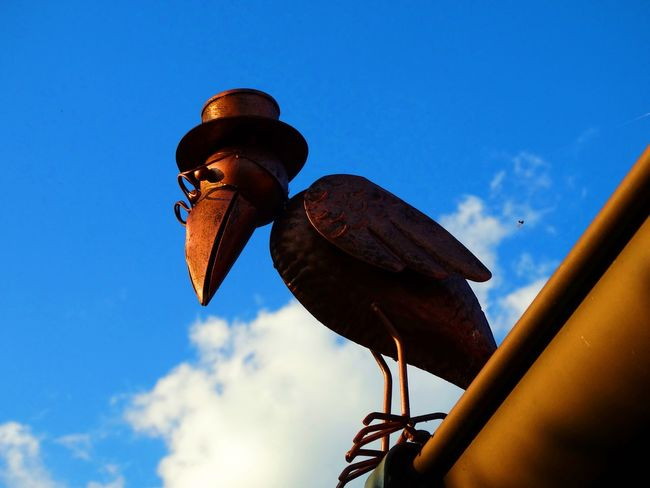 ... Bird Photography EyeEmNewHere Glasses Hat Nature Nature Photography Birds Blue Sky Naturelovers Sky