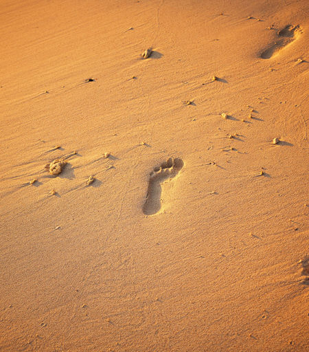 Close up of footprints on the beach sand at the golden hour. Beach Coast Coastline Foot FootPrint Footstep Freedom Golden Holiday Imprint Journey Landscape Leisure Lonely Mark Nature Ocean Path Peaceful Print Rawa Island Relax Relaxation Romantic Sand Sea Search Seashore Seaside Shore Shoreline Sign Space Step Summer Sun Sunlight Sunny Sunset Tourism Track Travel Vacation Walk Way Wet