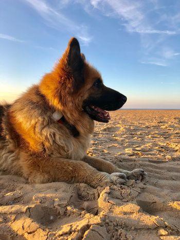 Ruby One Animal Dog Canine Animal Mammal Domestic Pets