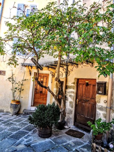 Provence Provence Alpes Cote D´Azur Architecture Beauty In Nature Building Exterior Built Structure Day Growth Leaf Nature No People Outdoors Plant Potted Plant Provence Village Provencealpescôtedazur Tree