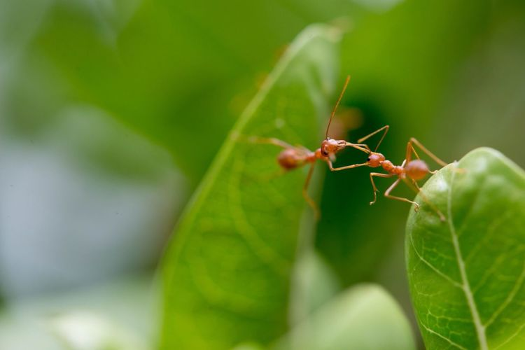 EyeEm Selects Invertebrate Insect Animal Wildlife Animal Themes Animals In The Wild Animal Plant Part One Animal Leaf Green Color Close-up Day Focus On Foreground Ant Nature Selective Focus Plant Animal Body Part No People Outdoors