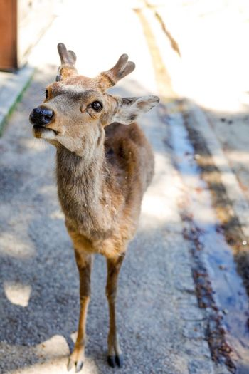 The Great Outdoors - 2017 EyeEm Awards Animals In The Wild Animal Wildlife Deer Animal Themes Nature Nature Naturelovers Wildlife & Nature Wildlife Photography Wildlife Capture The Moment Canonphotography Canon