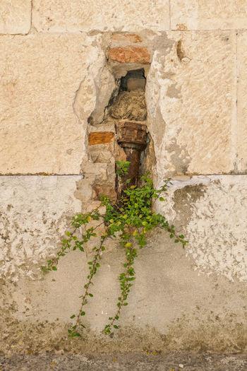 Architecture Built Structure Wall - Building Feature Building Exterior No People Wall Stone Material Old History The Past Day Outdoors Stone Wall Solid Nature Plant Building Close-up Weathered Leaf Ancient Civilization Concrete