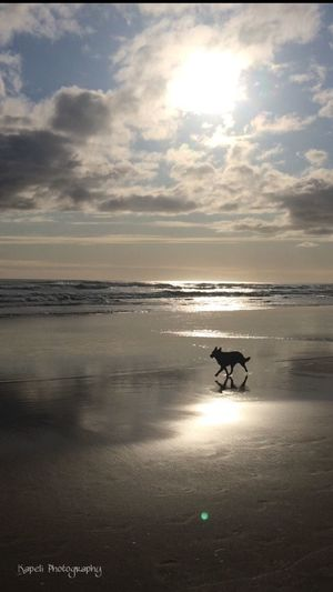 Dogs at the beach sure made my day extra special. 😆😁 Dog EyeEm Best Shots Silhouette Light And Shadow Shadow Eye4photography  Life Is A Beach Beach IPhoneography EyeEm Nature Lover