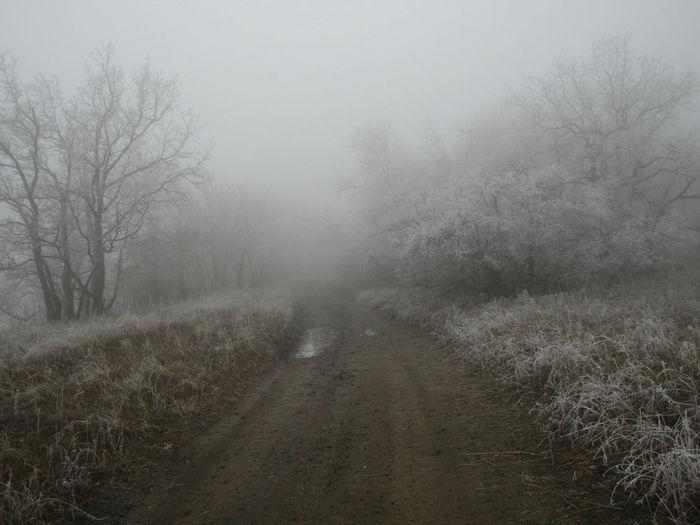 Fog туман Forest Nature Лес осень деревья Fog In The Forest
