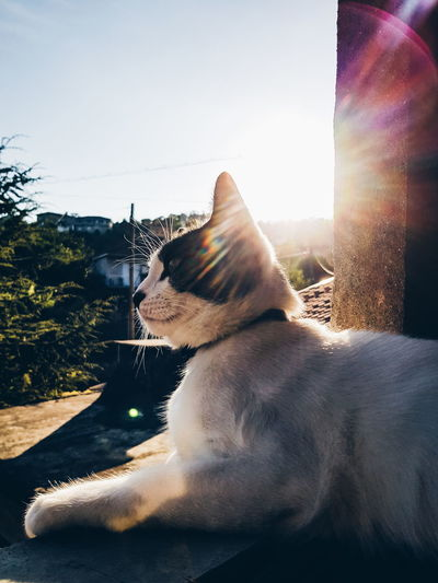 Cat Power Sunny Day Phonecamera PhonePhotography SamsungGalaxyS8 Light And Shadow Animals Cutepet Blue Sky Light Cat Lovely Cute Catlovers Posing View Dayoff Perspective Lines Pets Sitting Tree Sky Close-up Sunset Looking Through Window Silhouette Outline Sun Scenics Calm