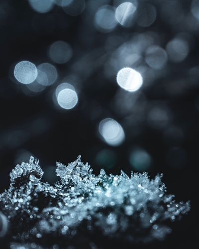 Close-up of frozen plant at night during winter