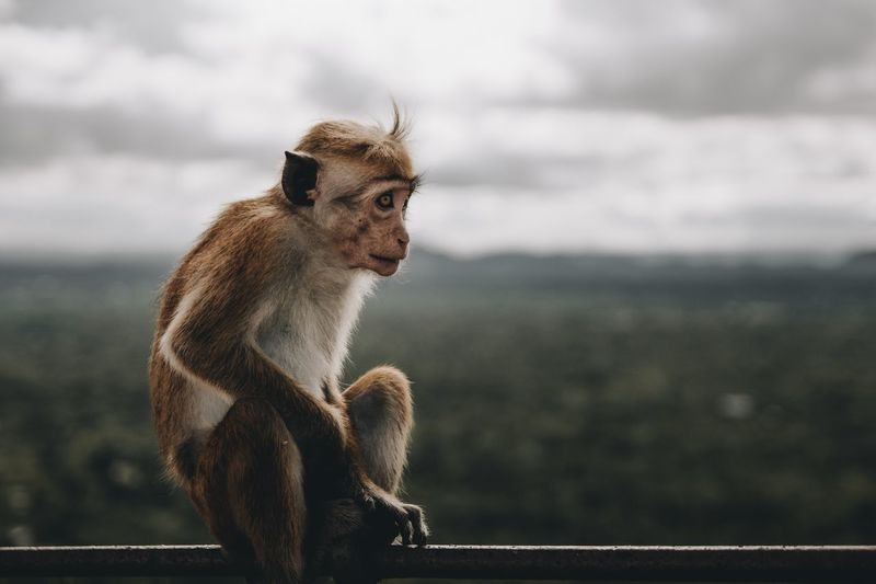Monkey sitting against sky