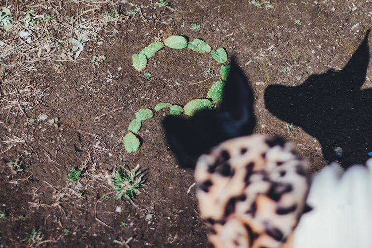Inquiry Question Questions Question Mark Abstract Still Life Simplicity Simple Minimal Minimalism Photography Dog Pets High Angle View Selective Focus Nature No People Day Land Plant Growth Close-up Food Leaf Field Plant Part Green Color Freshness Solid Dirt Food And Drink Outdoors Beauty In Nature