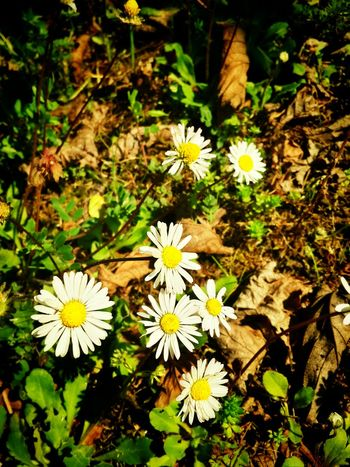Flower Eyeem Natur Lover Beautiful Nature Nature_collection