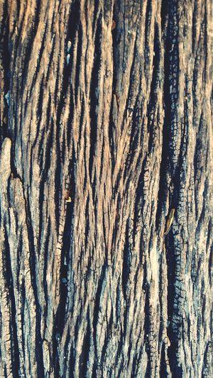 wood Tree Roots