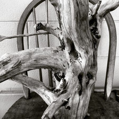 Dead Tree White Tree Trunks Trunk Tree