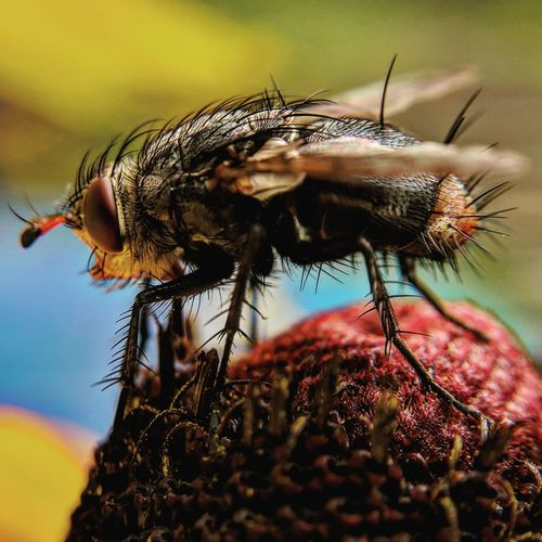 Close-up of housefly on plant