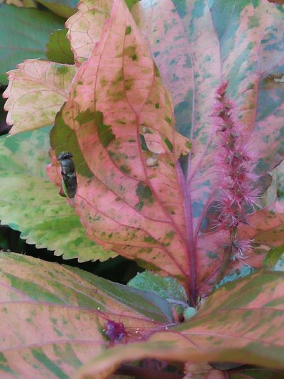 Leaf Flower Multi Colored Close-up Plant