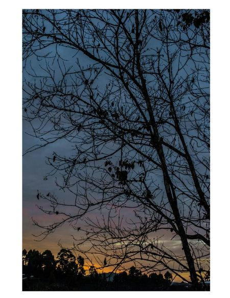 Tree Silhouette Sky Low Angle View Sunset No People Nature Branch Bare Tree Outdoors Beauty In Nature Day