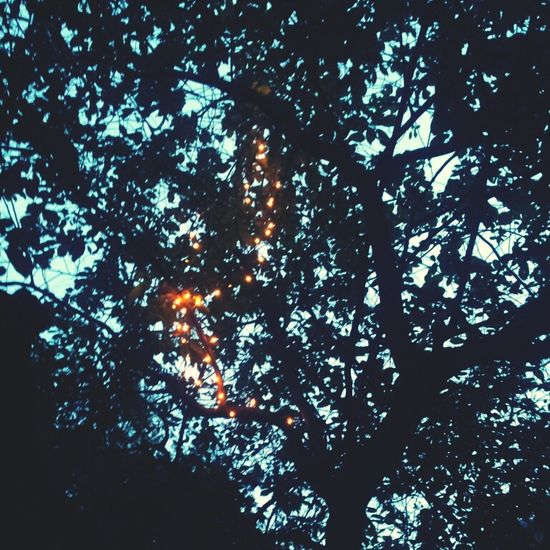 Things That Are Green Lights Tree Tangerine Dream