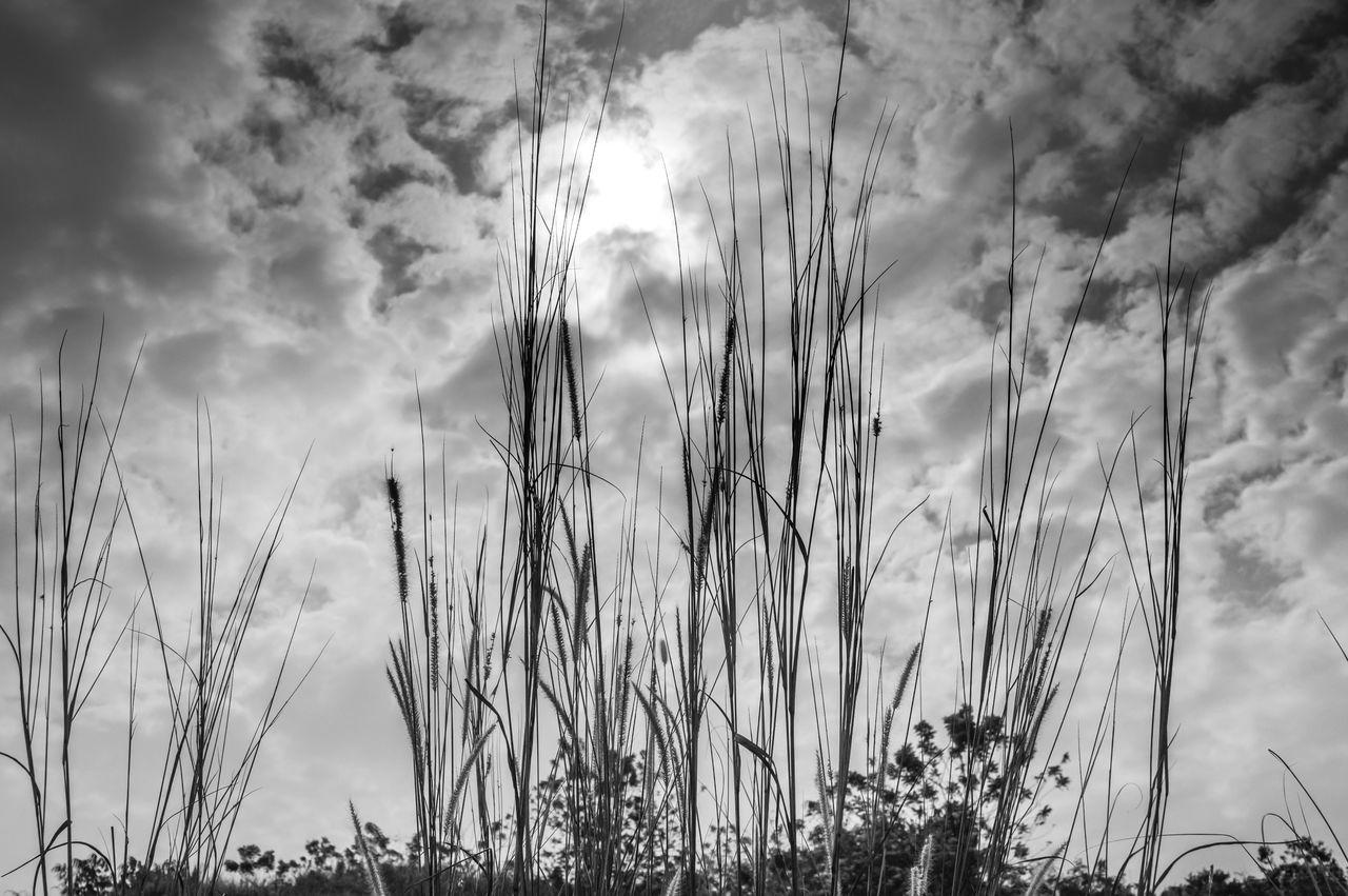 PLANTS AGAINST CLOUDY SKY