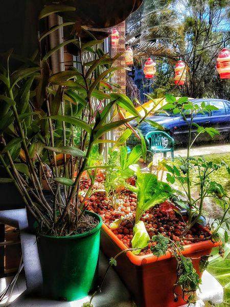 Aquaponics Potted Plant Plant Growth Houseplant Growing Freshness