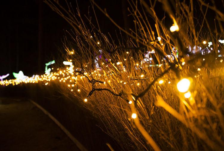 Illuminated Night Lighting Equipment Glowing No People Decoration Celebration Christmas Lights Light Nature