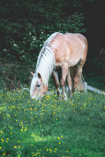 Animal Animal Themes Day Domestic Animals Field Grass Grassy Herbivorous Horse Livestock Mammal Nature No People One Animal Zoology
