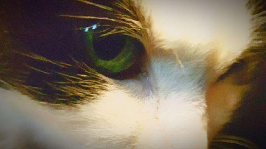 Green Eye Green