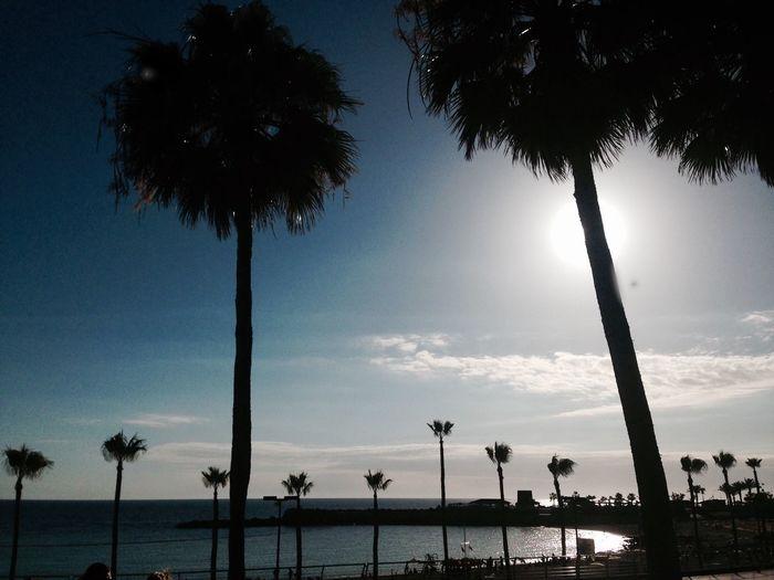 Palm Tree Sky Sunset Outdoors No People