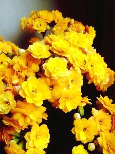 Eyem Gallery Eyemphotography Türkkahvesi EyeEm Nature Lover Flowers Photography Photo EyeEm Best Shots Nature Nature Photography Flower Head Flower Yellow Petal Close-up