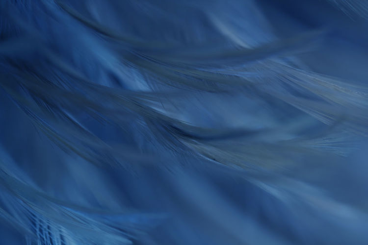 Backgrounds Full Frame Motion Softness Blue Abstract No People Pattern Textile Feather  Close-up Textured  Lightweight Abstract Backgrounds Blurred Motion Nature Rippled Water Wave Extreme Close-up Flowing