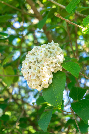 Low angle view of white flowering plant