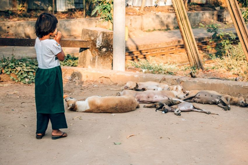 The Moment - 2015 EyeEm Awards The Street Photographer - 2015 EyeEm Awards Streetphotography Praying Dead Dogs