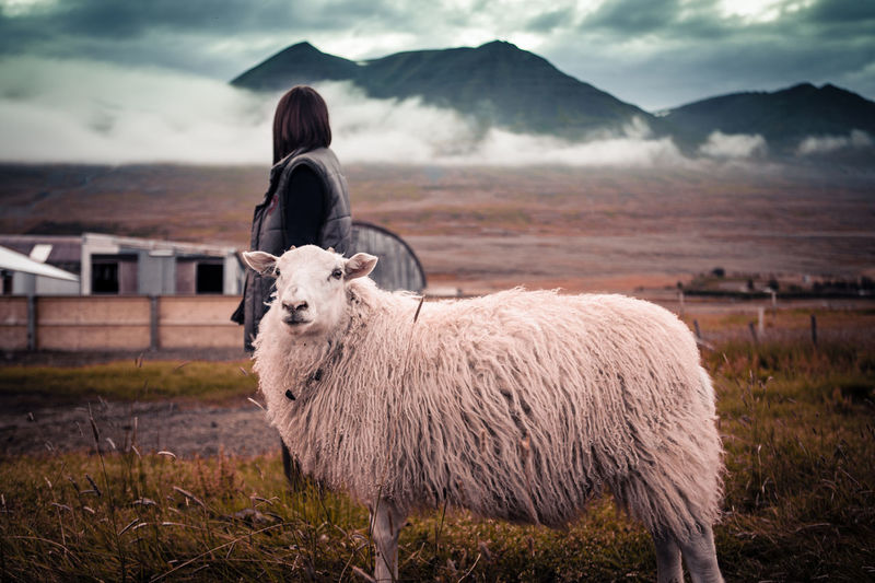 Women standing with a sheep in iceland mountain