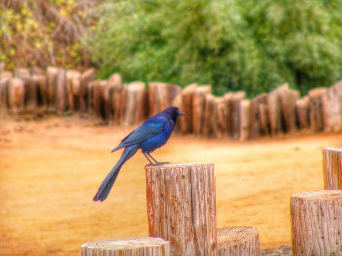Taking Pictures Enjoying Nature Hello World Check This Out EyeEm Birds Zoo Animals