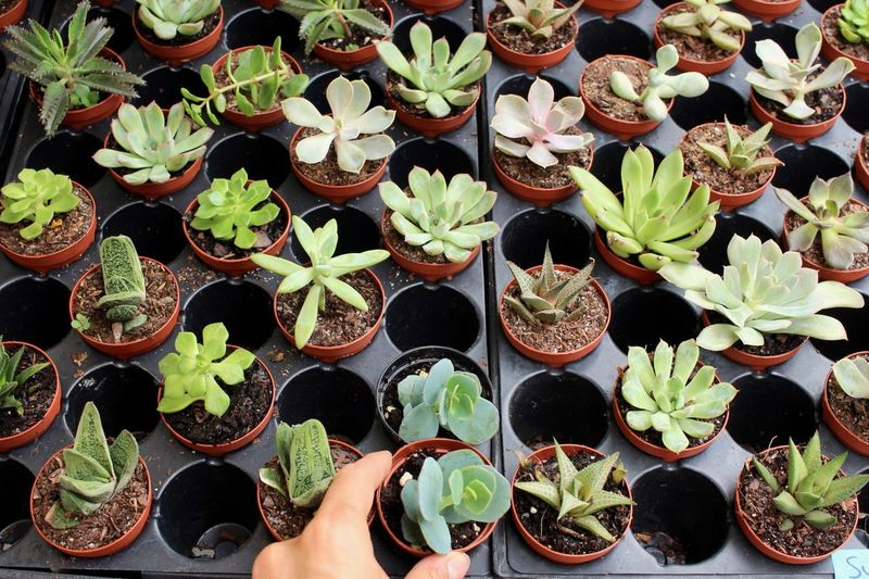 Potted Plant Plant Growth Leaf Cactus Variation Human Body Part Plant Nursery Succulents Freshness Fragility Close-up Investing In Quality Of Life Plants Abundance Beauty In Nature Nature The Week On EyeEm Be. Ready. Step It Up One Step Forward Crafted Beauty