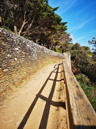 Sunny☀ Old Wall