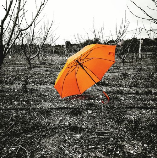 my umbrella is Red ☔ Redumbrella Red Protection Wet Weather Rain Close-up Rainy Season Umbrella