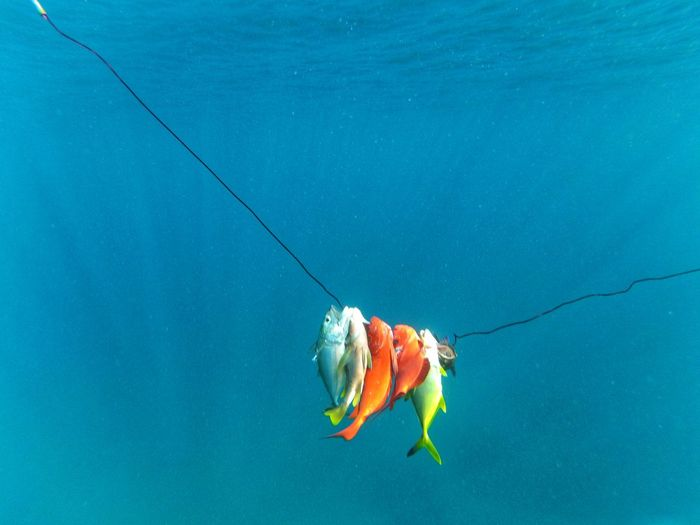 Fish on shooting line