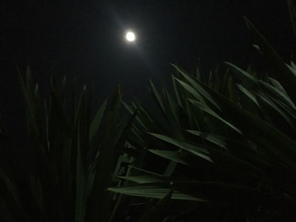Night Moon Growth Nature Beauty In Nature Plant No People
